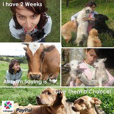 Help Juliana build a New No Kill Animal Shelter No Kill Animal Shelter, Farm Life, Friends, Building, Animals, Construction, Animales, Animaux, Animal