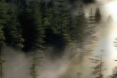 solomonar - Google Search Northern Lights, Google Search, Travel, Outdoor, Outdoors, Viajes, Destinations, Nordic Lights, Aurora Borealis