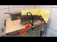 Como Cazar Ratas Vivas NIVEL MINECRAFT 2017 // HUNTING RATS GOD LEVEL - YouTube