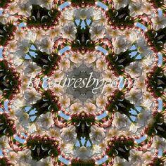 Mandala Kaleidoskop ''Zierblüte'' Kreatives by Petra #mandala 'kaleidoskop #spiegelung #reflektion #reflection #innereruhe #inspiration #zierblüte #ornamentalflower #rosa #rose #blumen #flowers #blüten #blossom #frühling #spring #sommer #summer #home #deko #dekoration #plakat #poster #leinwand #canvas Rosa Rose, Petra, Floral Wreath, Wreaths, Inspiration, Decor, Mandalas, Home Decoration, Mosaics