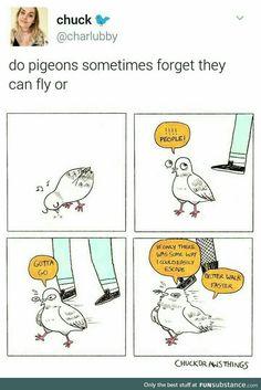 Tauben sind soooo süüüüß ^^ - Funny,Funny memes,Funny pic,Funny world. Funny Cute, The Funny, Hilarious, Cute Comics, Funny Comics, Animal Memes, Funny Animals, Tumblr Funny, Funny Memes