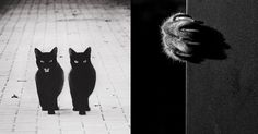 The Mysterious Lives Of Cats Captured In Black & White | Bored Panda