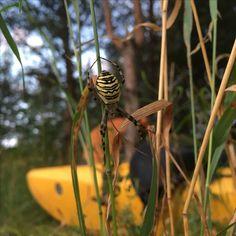 spider on the Czarna Hancza river; pająk nad rzeką Czarna Hańcza; photo by Space with Love