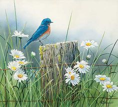 Summer Meadow – Western Bluebird Original Painting