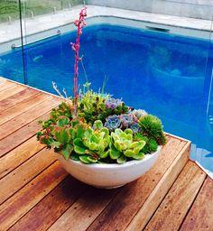 Suculents Pot Interior Design, Vegetables, Fashion Design, Style, Nest Design, Swag, Home Interior Design, Stylus, Interior Designing