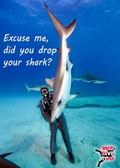 Sharks deserve respect!  When diving you should always remember that while sharks are not the evil creatures movies like Jaws made them out to be, they are still bigger than you, with large teeth.  Real shark attacks are much rarer than the public assume, but if you start thinking of them as toys then things could end badly.  #divers #scubadiving