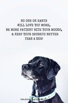 No One On Earth Will Love You More, Be More Patient With Your Moods, & Keep Your Secrets Better Than A Dog - Dog Quote