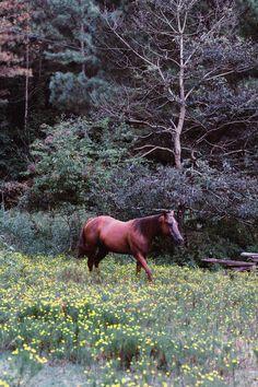Moose Art, Photography, Animals, Image, Photograph, Animales, Animaux, Fotografie, Photoshoot