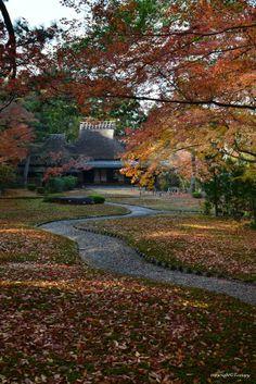 Nara, Japan   by Tom go on 500px