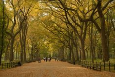 Central Park Mall in Autumn, NYC