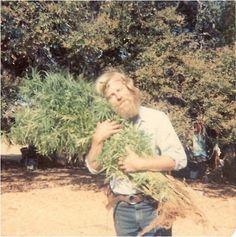 true love  ( marijuana cannabis )