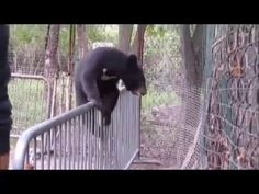Funny bear cub