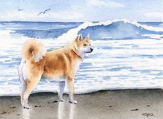 AKITA At The BEACH Dog Signed Art Print by Artist DJ Rogers