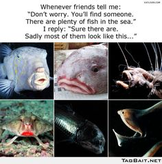 sometimes I think it's true.if the outside appearance doesn't match, I think there are quite a few that resemble the top right picture on the inside. Really Funny, The Funny, Why Im Single, I'm Single, Single Ladies, Single Life, Dry Sense Of Humor, Blobfish, Plenty Of Fish