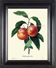 BOTANICAL PRINT Redoute Flower 8x10 Botanical Art by LoveThePrint, $10.00