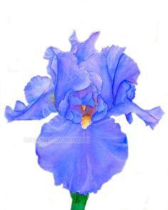 "iris watercolor print of painting 8"" x 10"". $18.00, via Etsy."