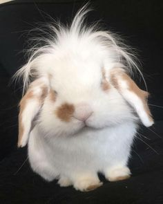 // bunny with the fab hair Cute Funny Animals, Cute Baby Animals, Animals And Pets, Rabbit Pictures, Cute Animal Pictures, Beautiful Rabbit, Animal Art Projects, Cute Baby Bunnies, Rabbit Baby