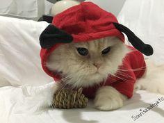 """El gato del día """"disfraz de demonio muahahaha"""""""