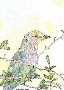 Observation Point - color pointillism