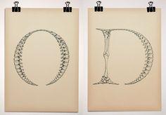 Typeface Anatomy -  Björn Johansson -  http://www.behance.net/gallery/Typeface-Anatomy/54940