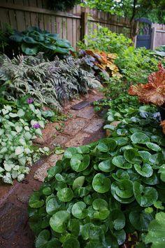 Shade garden 390265123938030692 - Ferns, ginger, lamium, hosta Source by Side Garden, Garden Paths, Easy Garden, Back Gardens, Outdoor Gardens, Landscape Design, Garden Design, Shade Garden Plants, Garden Planters