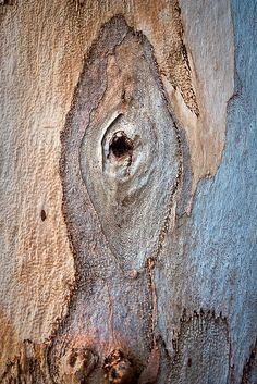 tree trunk, photo by Gary Sauer-Thompson on flickr