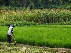 Dibutuhkan ketelatenan dan keseriusan dalam pengolahan lahan organik.