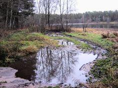 road in winter - autumn mirror