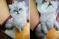 Mi-gato-tiene-nudos.jpg (600×398)