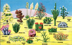 """""""The abounding southwestern desert Cacti and flora are one of this areas most significant and beautiful attractions."""""""