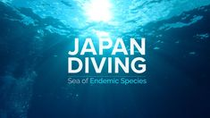 JAPAN DIVING Dive into the Biodiversity Hot Spot Website: The post JAPAN DIVING | Sea of Endemic Species | JNTO appeared first on Alo Japan.