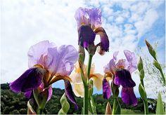 todays flowers