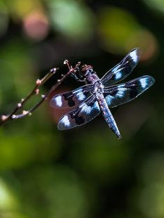 Delightful Dragonfly! Always around me, I believe they're good luck!! ;)