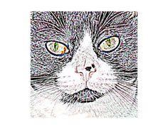 Tuxedo Cat Art Print Wall Art Gift for Cat Lover by WhimZingers