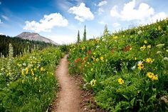 Crested Butte, CO breathtaking during wildflower season. Cutest liitle candy land town and some of the best snowboarding in Colorado!