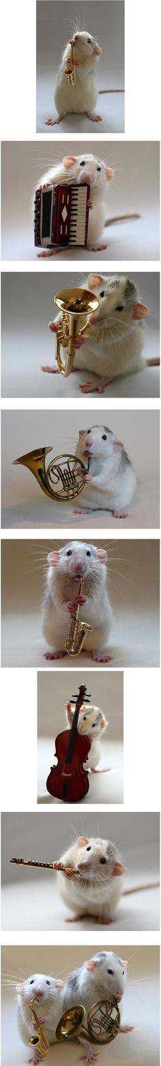 Adorable rat orchestra