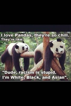 Funny pandas Could not be better said! Let's all live like PANDA'S! Funny Shit, Funny Cute, The Funny, Funny Memes, Funny Stuff, Hilarious Quotes, Funny Gifs, Funny Things, Photo Panda