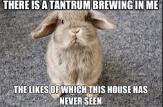 Rabbit Ramblings: Bunny Monday Meme*day (Tantrum)