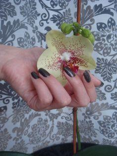 aaaaaaa! My precious is blooming <3