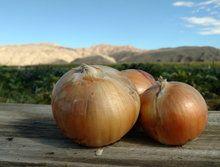 Onions: Yellow (/lb)