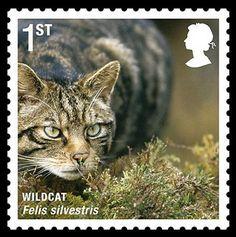 Great Britain -  Wild Cat / Felis silvestris