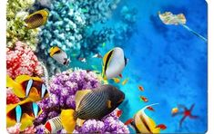 Die schönste Tour ins Great Barrier Reef: Tauchen und Schnorcheln Amazing Things To Do in Australia Best Island Vacation, Maui Vacation, Winter In Australia, Australia Travel, Brisbane Australia, South Australia, Great Barrier Reef Tauchen, Great Barrier Reef Snorkeling, Cairns