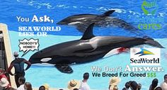 You Ask, SeaWorld Lies or Doesn't Answer-They Breed For Greed $$$  #DontBuyATicket #EmptyTheTanks Watch #Blackfish Boycott Marine Parks that have Dolphin, Whale, Penguin, Seal or Sea Lion Shows #CaptivityKills