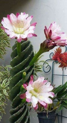 Beautiful cactus succulents for outdoor planters and pots DIY flower pots are a great way to add some character to your flowers both indoors and outdoors. Unusual Plants, Exotic Plants, Exotic Flowers, Amazing Flowers, Purple Flowers, Ranunculus Flowers, Weird Plants, Hibiscus Flowers, White Flowers