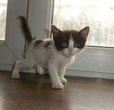 Gato Goku. Se recupera del abandono. Goku, Animals, Kittens For Adoption, Foot Prints, Gatos, Animales, Animaux, Animal, Animais