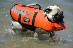 Mr. Pug says: Safety first