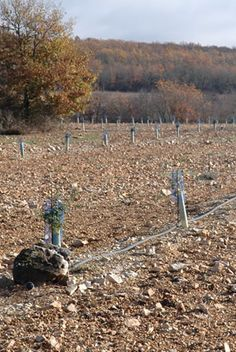 Truffle Orchard. Truffles can be cultivated in the U.S. from inoculated hazelnut and oak trees. After waiting a few years, they can fetch up to several hundred dollars per pound once they begin forming.