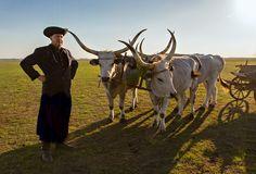 Hortobágy National Park - the Puszta - Hungary Creative Skills, Place Of Worship, Popular Culture, World Heritage Sites, Bulgaria, Cattle, Romania, Pop Art, National Parks