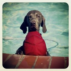 Swimming lessons!