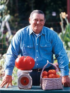 World's Record Tomato - News - Bubblews
